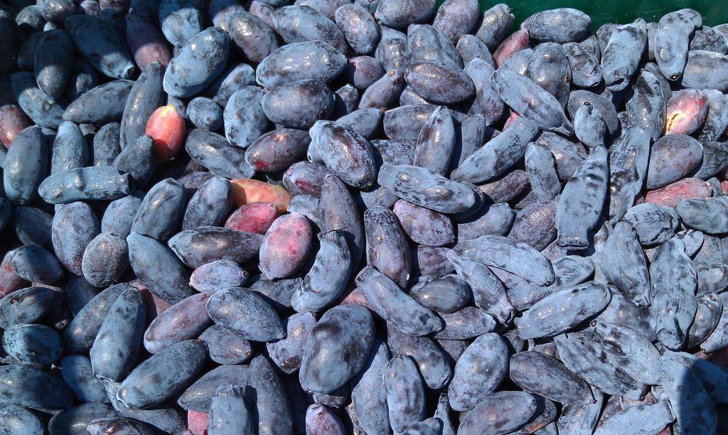 Maibeere, Früchte