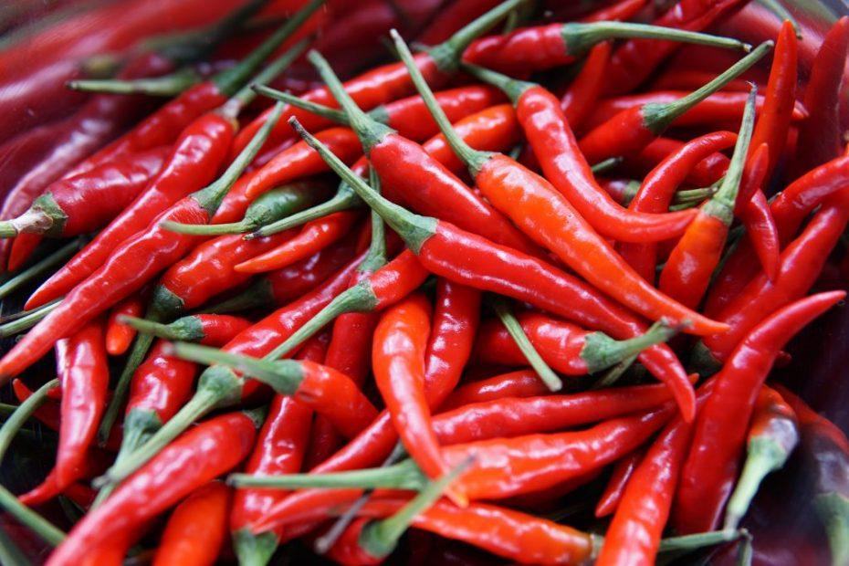 rote Chili-Schoten
