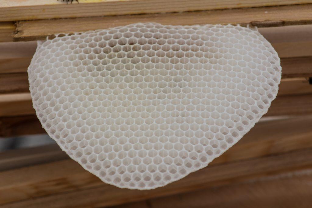 Bienenwachs frische, weiße Wabe